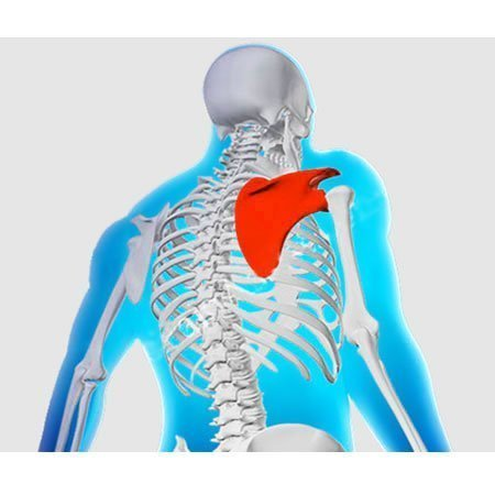 Shoulder pain caused by shoulder blade